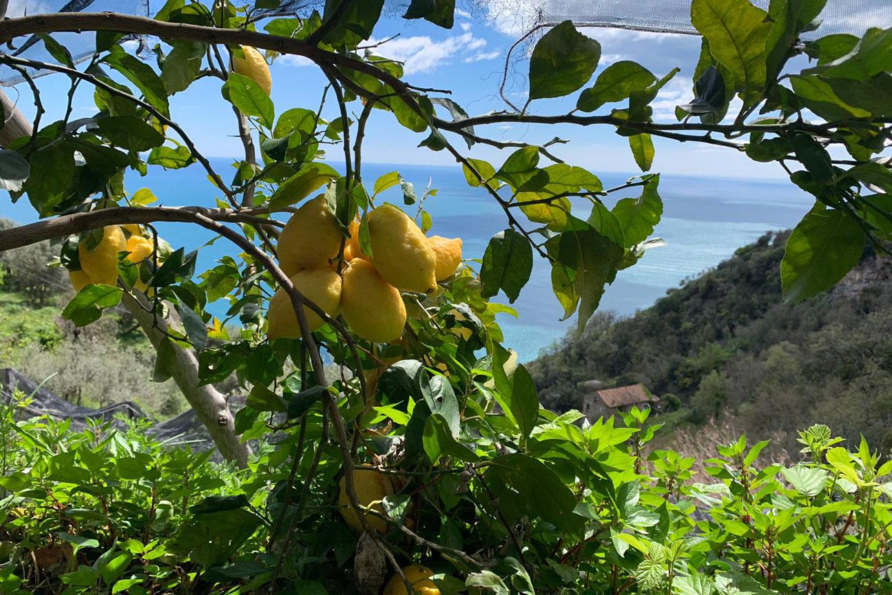 lemon-tour2
